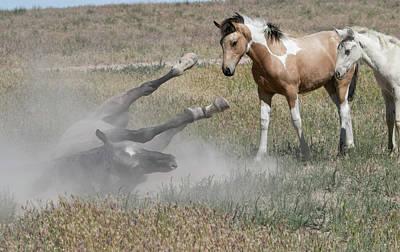 Photograph - Curious Foals by Kent Keller