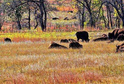 Photograph - Roaming Bisons Custer State Park South Dakota United States Of America by Gerlinde Keating - Galleria GK Keating Associates Inc