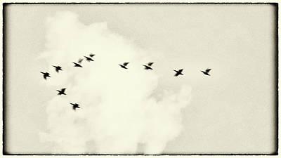 Photograph - Cygne by Jorg Becker