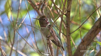 Keith Richards - Hummingbird 2_Sedona_Arizona by Randy Matthews