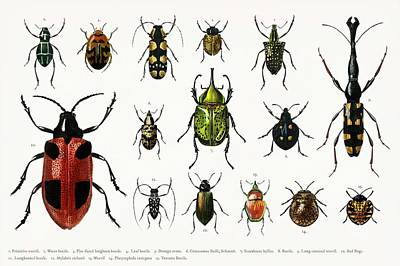 Vintage College Subway Signs Color - Different types of insects illustrated by Charles Dessalines D  Orbigny  1806 1876  3 by Celestial Images
