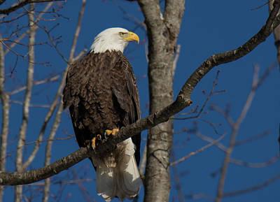 Thomas Kinkade Rights Managed Images - Eagle Look Royalty-Free Image by Judd Nathan