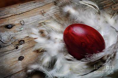 Photograph - Easter Egg by Jelena Jovanovic