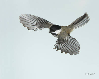 Photograph - Easy Glider by Gerry Sibell