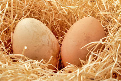 Photograph - Eggs In A Straw Nest by Fabrizio Troiani