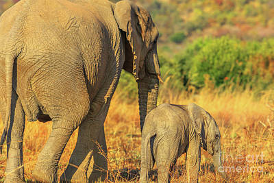 Photograph - Elephant With Calf by Benny Marty