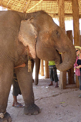 Door Locks And Handles Rights Managed Images - Elephants in a  retirment camp f Royalty-Free Image by Steve Estvanik