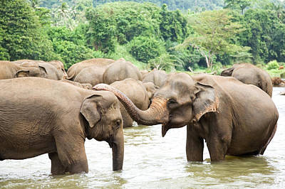 Animal Family Photograph - Elephants In River by Lp7