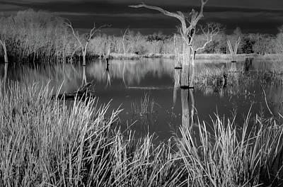 Photograph - Elm Lake 5 by David Heilman