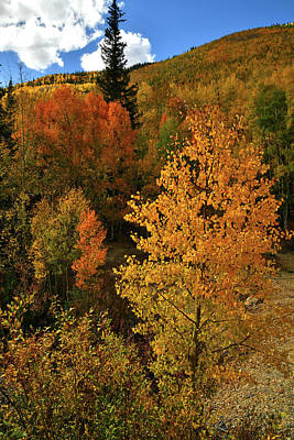 Photograph - Fall Colors At Red Mountain Pass by Ray Mathis