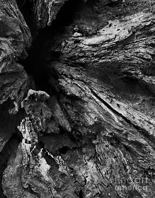 Cactus - Fallen - Hawthorne Hill Woods, Woodridge IL by Tim Jensen