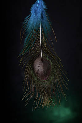Photograph - Feather by Christine Sponchia