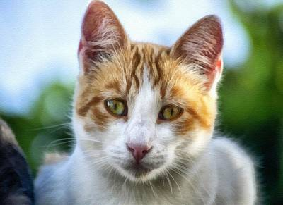 Travel - Feline Cutie Pie L B by Gert J Rheeders