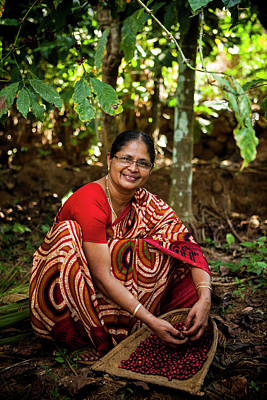 Kerala Photograph - Female Coffee Farmer Harvesting Coffee by Simon Rawles