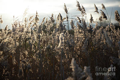 Photograph - Fine Art Nature by Jenny Potter
