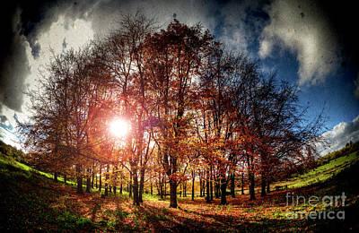 Digital Art - Fire in the Trees by Nigel Bangert