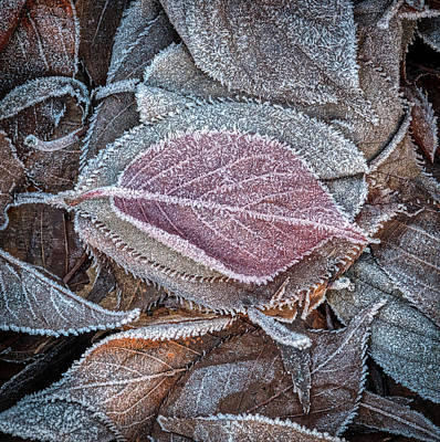 Photograph - First Frost by William Ferry