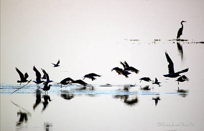 Art Print featuring the photograph Flight by Buddy Scott