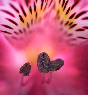 Photograph - Flower Close Up by John Rodrigues