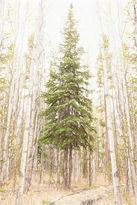 Photograph - Forest King by Jennifer Grossnickle