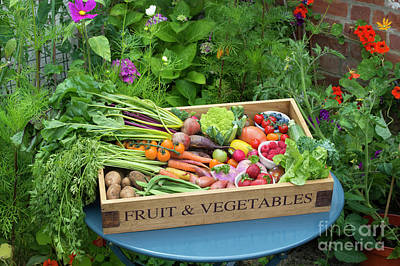 Photograph - Garden Produce by Tim Gainey