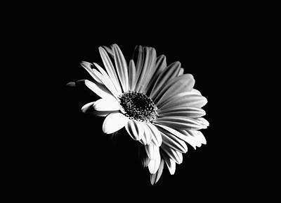 Zen - Gerbera Monochrome by Jeff Townsend