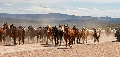 Photograph - Great American Horse Drive by Brenda Jacobs