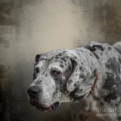 Mixed Media - Great Dane Portrait by Eva Lechner