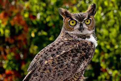 Mississippi Kite Photograph - Great Horned Owl by Michael Gordon
