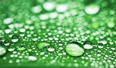 Royalty-Free and Rights-Managed Images - Green leaf with water drops after rain. by Michal Bednarek