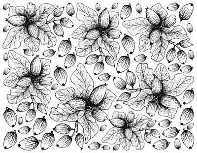 Amy Hamilton Watercolor Animals - Hand Drawn of Cryptocarya Alba Fruits on White Background by Iam Nee