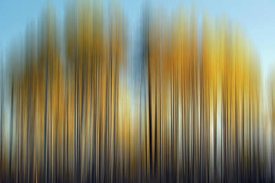 Photograph - Hart Prairie Aspens  by Jeff Brunton