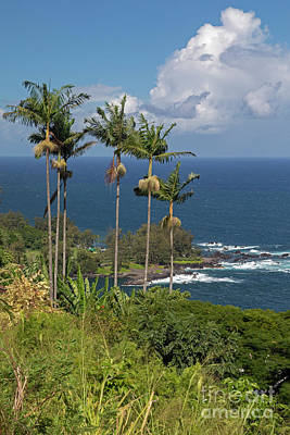 Photograph - Hawaii Big Island by Jim West