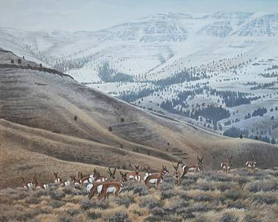 Painting - High Country Pronghorn by Peter Mathios
