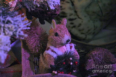 Photograph - Holiday Nuts by Marie Neder