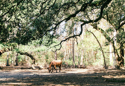 Photograph - Horse by Andrea Anderegg