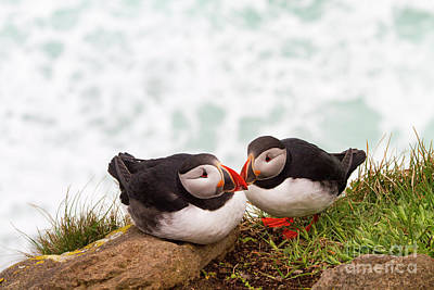 Wall Art - Photograph - Icelands Puffins. by Sebastien Coell