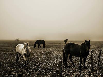 Photograph - Im Nebel by Jorg Becker