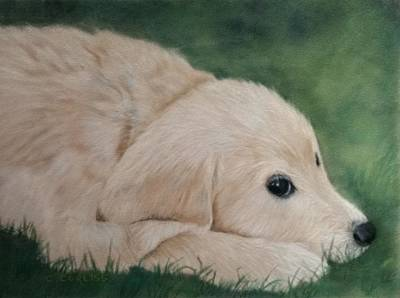 Pastel - It Wasn't Me by Carol Corliss