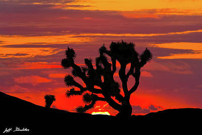 Photograph - Joshua Tree At Sunset by Jeff Goulden