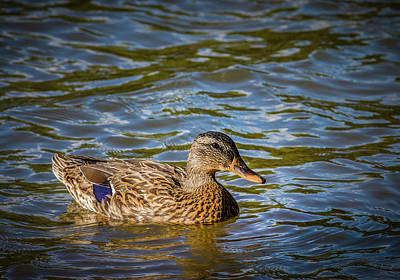 Photograph - Just Ducky by Keith Smith