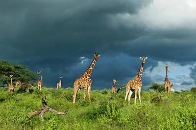 Photograph - Kenya, Samburu National Reserve by Denis-huot Michel / Hemis.fr