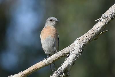 Photograph - Lady Bird by Fraida Gutovich