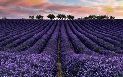 Photograph - Lavender Fields by Dawn Van Doorn