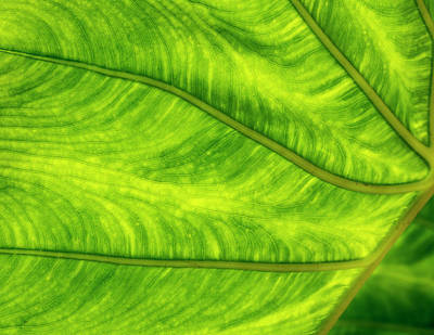 Photograph -  Leaf Design by Jean Noren