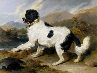 Painting - Lion - A Newfoundland Dog by Edwin Landseer