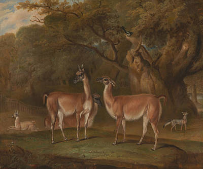 Painting - Llamas And A Fox In A Wooded Landscape by Thomas Weaver