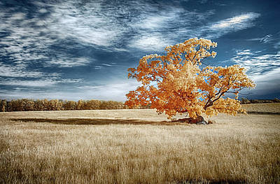 Photograph - Lone Tree by Dan Urban