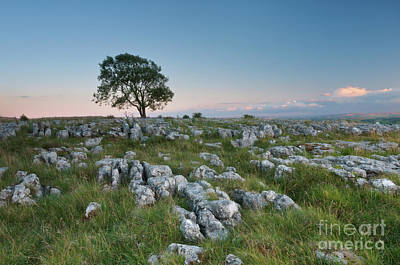 Moody Trees - Lonely Tree on the Limestone Pavement by Mariusz Talarek