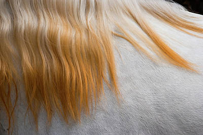 Photograph - Lusitano Horse, Bahia, Brazil by Mint Images - Art Wolfe